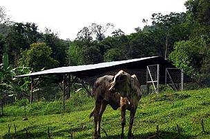 One of the paddocks built in Jerangau, to prevent tigers attacking livestock.