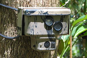 A camera-trap set in Jeli to assess the status on tigers in the area