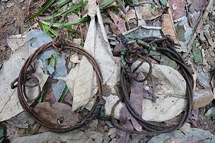 Among the wire snares found in the Belum-Temengor Forest Complex