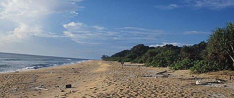 Ma' Daerah beach, Terengganu / ©: WWF-Malaysia/Rahayu Zulkifli