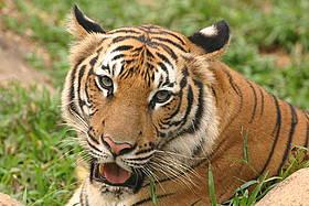 © WWF-Malaysia / Mikaail Kavangh
