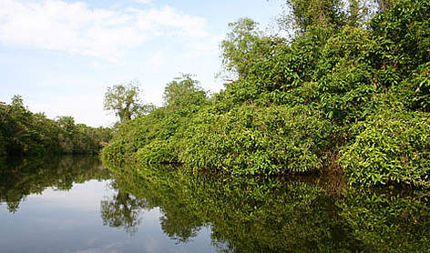 Riverine forest along the Setiu River rel=