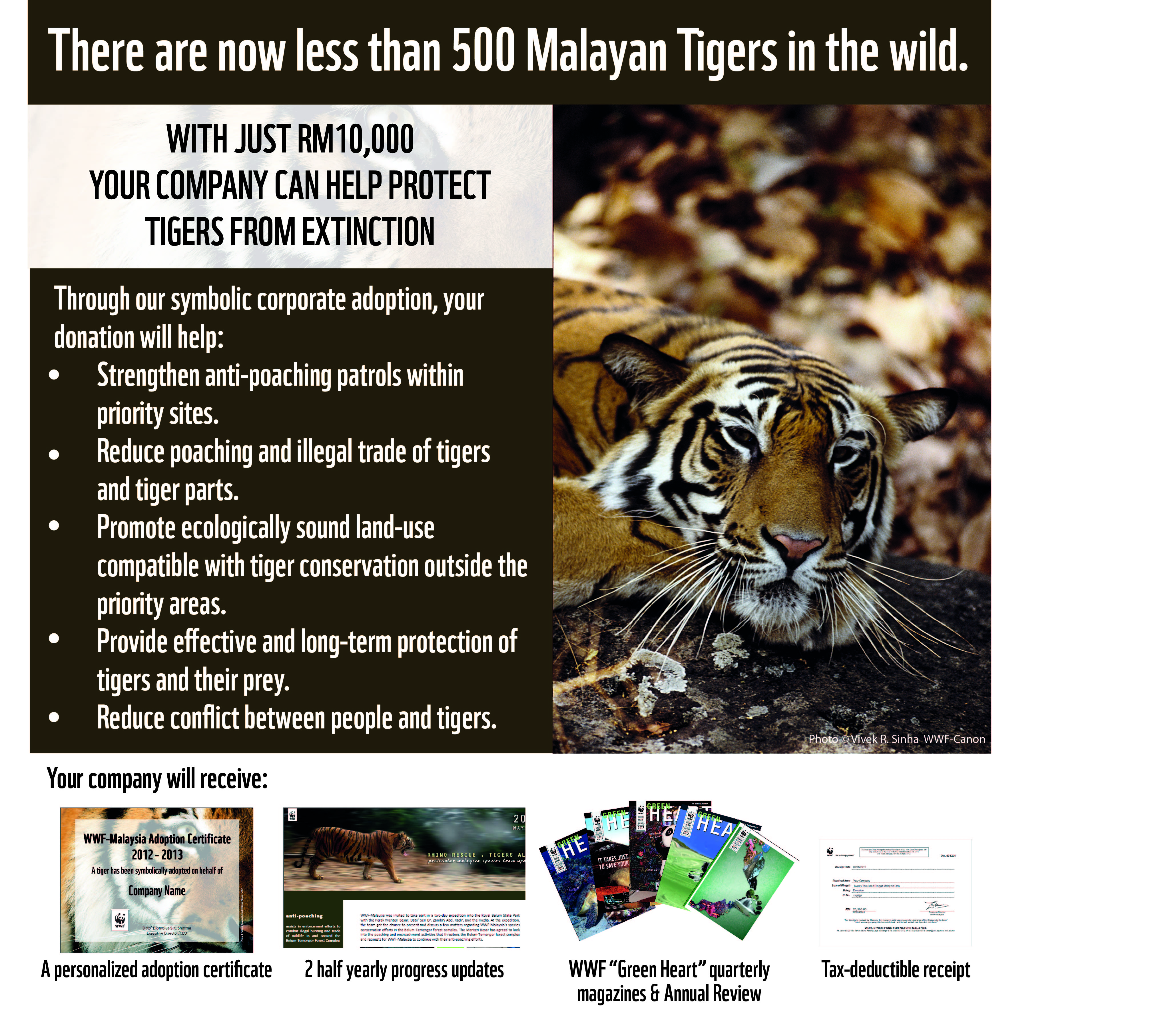 conservation of tigers essay