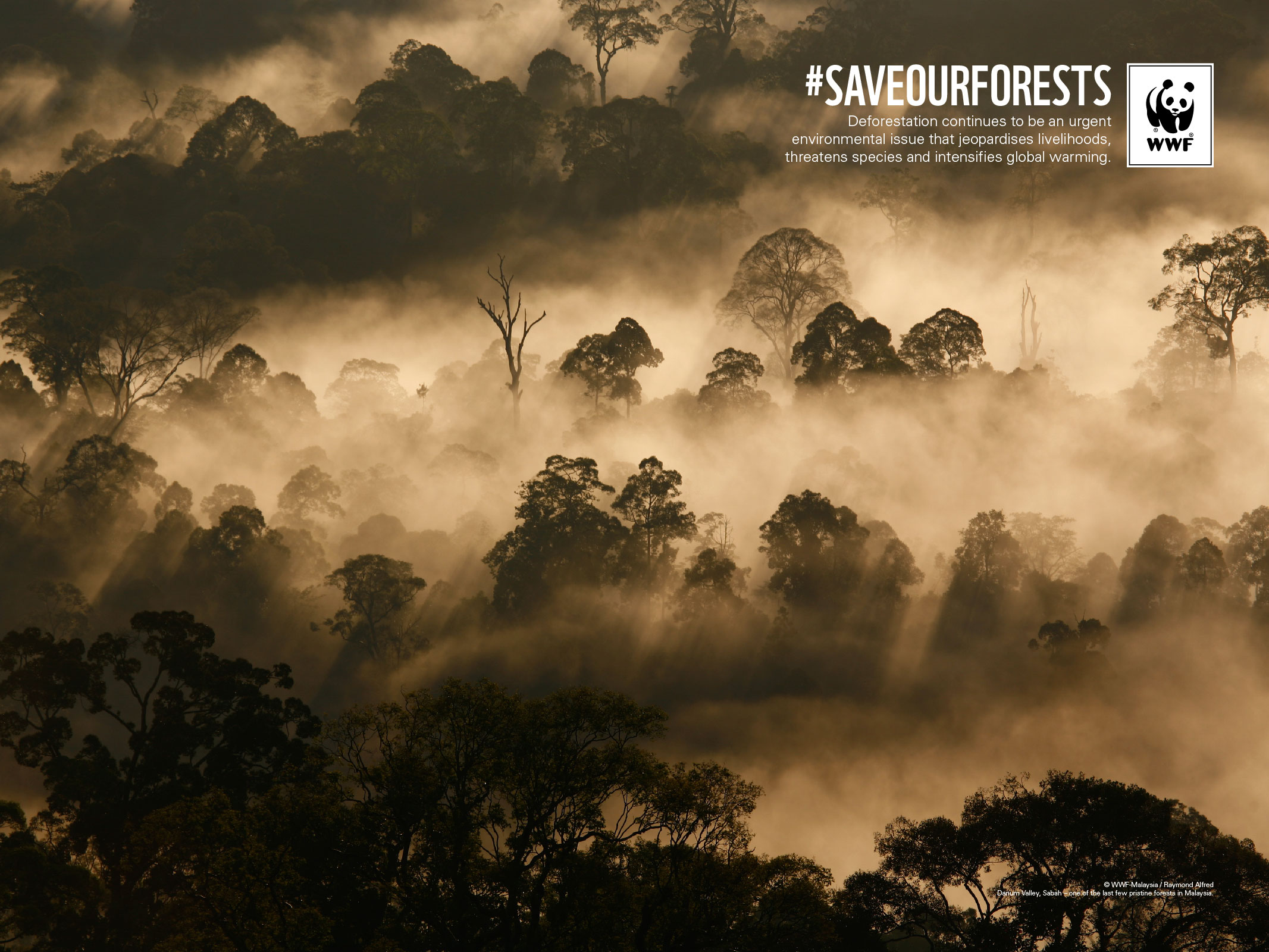 Archived Wallpapers | WWF Malaysia
