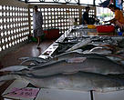 Sharks are commonly sold in wet market.